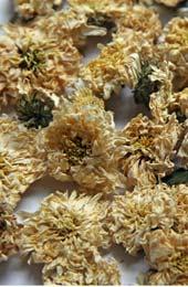 Květ chrysantémy