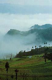 Oolong z Taiwanu - Formosa - Čínský čaj