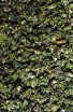 Green Monkey - Zelený čaj - Čínský čaj