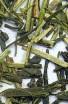 Kukicha (100g) - Zelený čaj - Japonský čaj