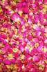 Květ růže (50g) - Bylinný čaj - Bylinné a ovocné čaje