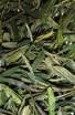 Tai Ping Hou Kui - Zelený čaj - Čínský čaj